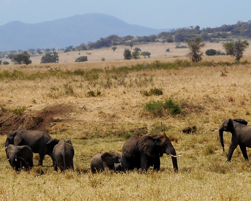4 Days Kidepo Valley flying safari